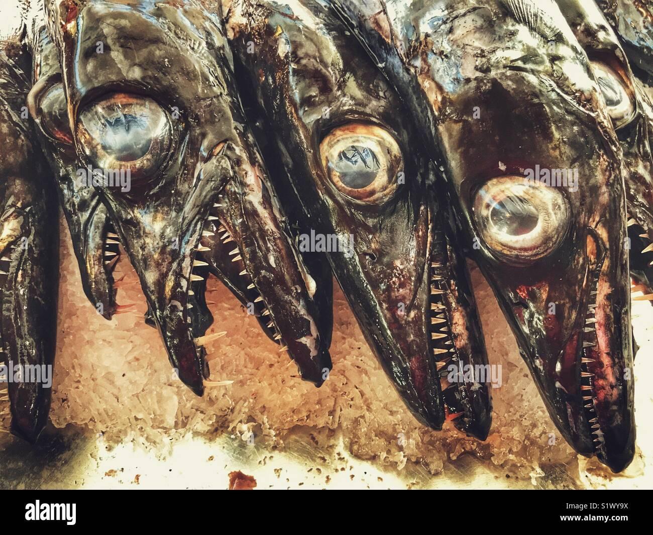 Pesce sciabola nero, Aphanopus carbo, su ghiaccio a una pressione di stallo di pesce al Mercado dos Lavradores, Immagini Stock