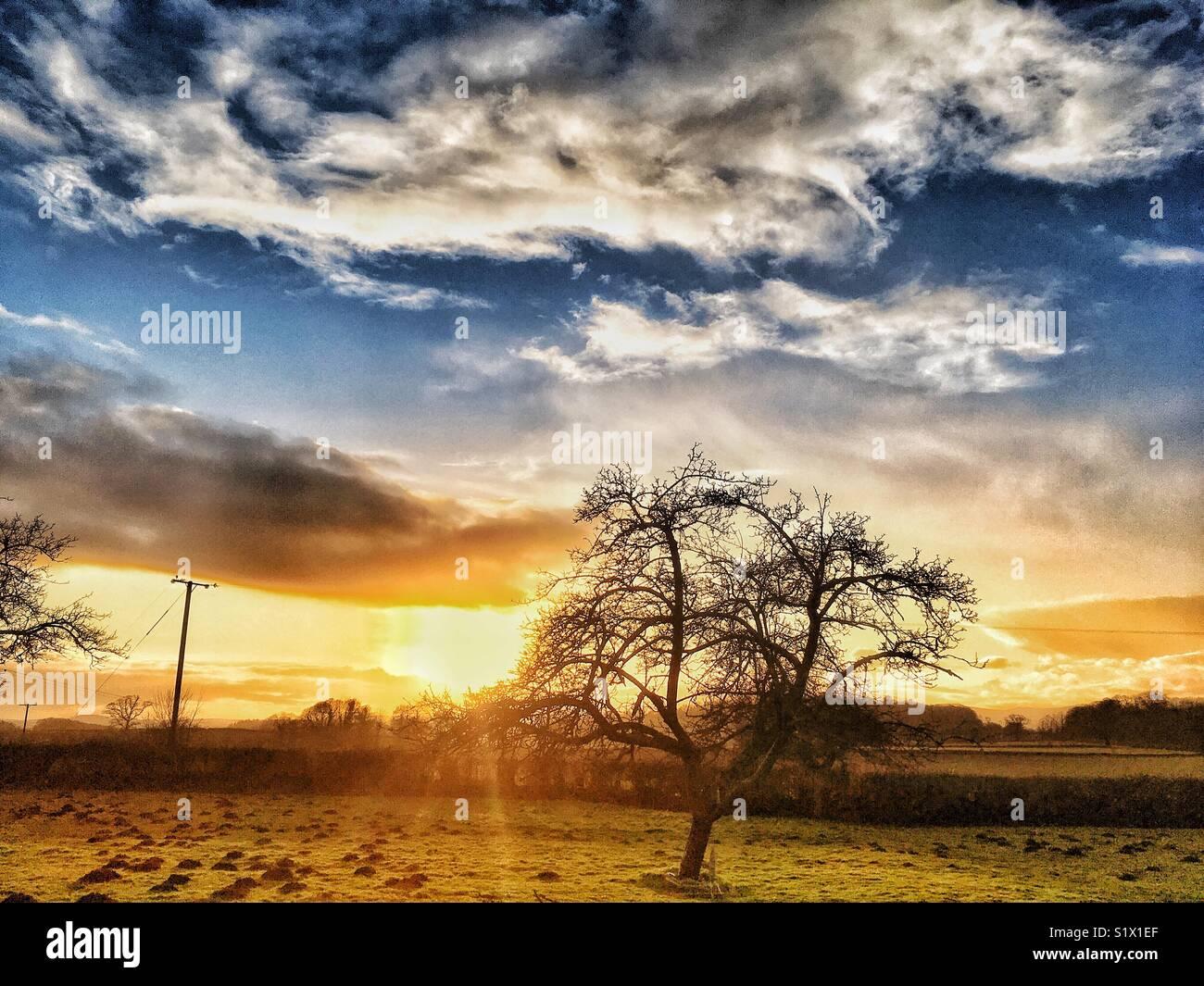 Il sole invernale Immagini Stock