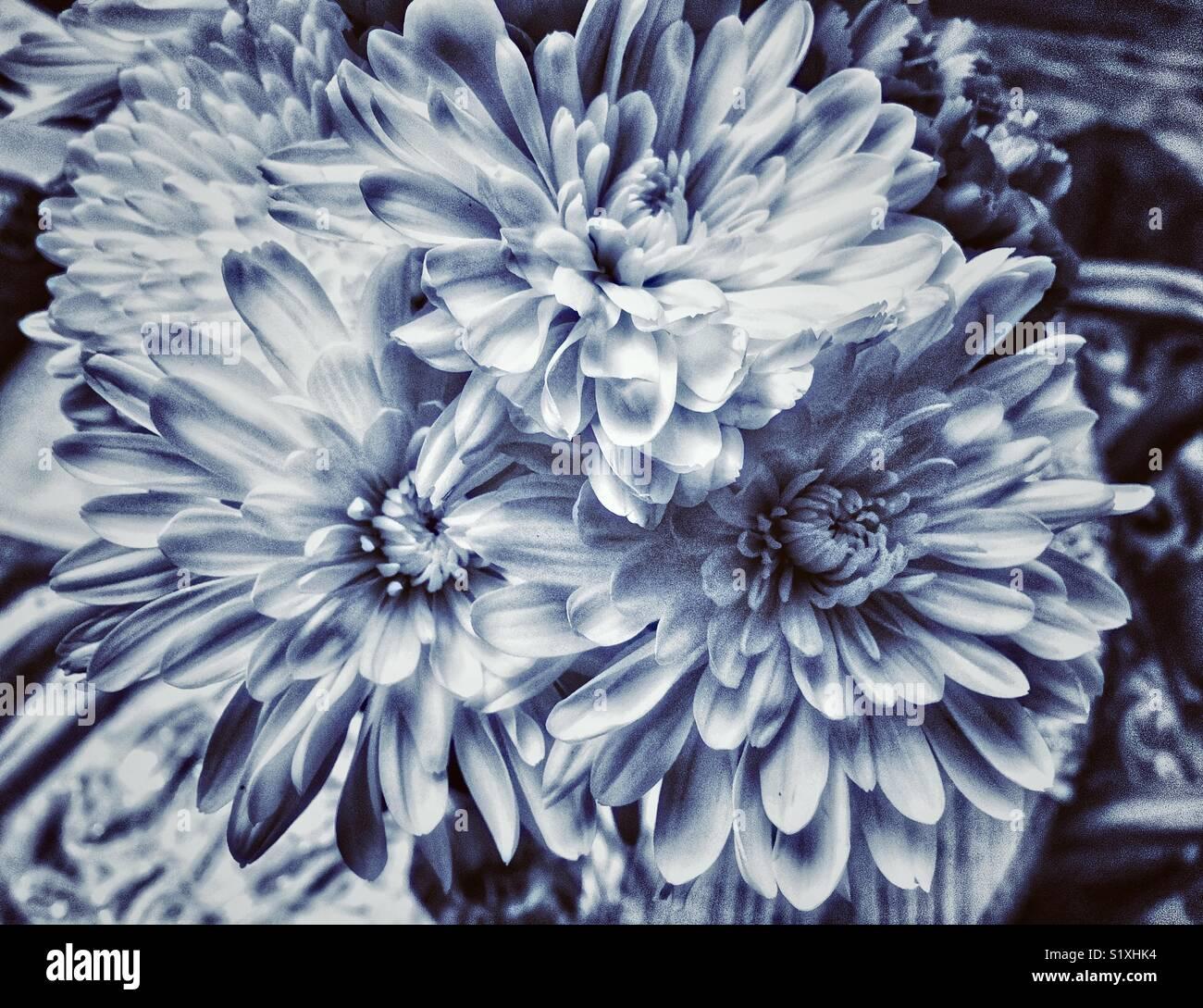 Fiori Blu E Bianchi.Bouquet Di Fiori Con Bianchi Crisantemi Smum E Bianco Dalie Di