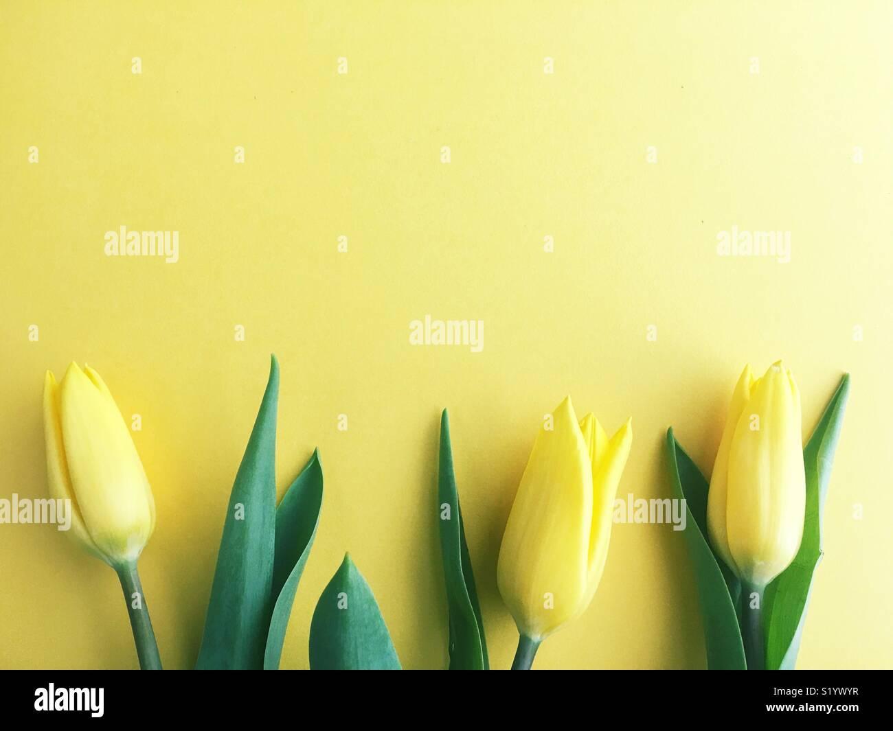 Tre tulipani. Immagini Stock