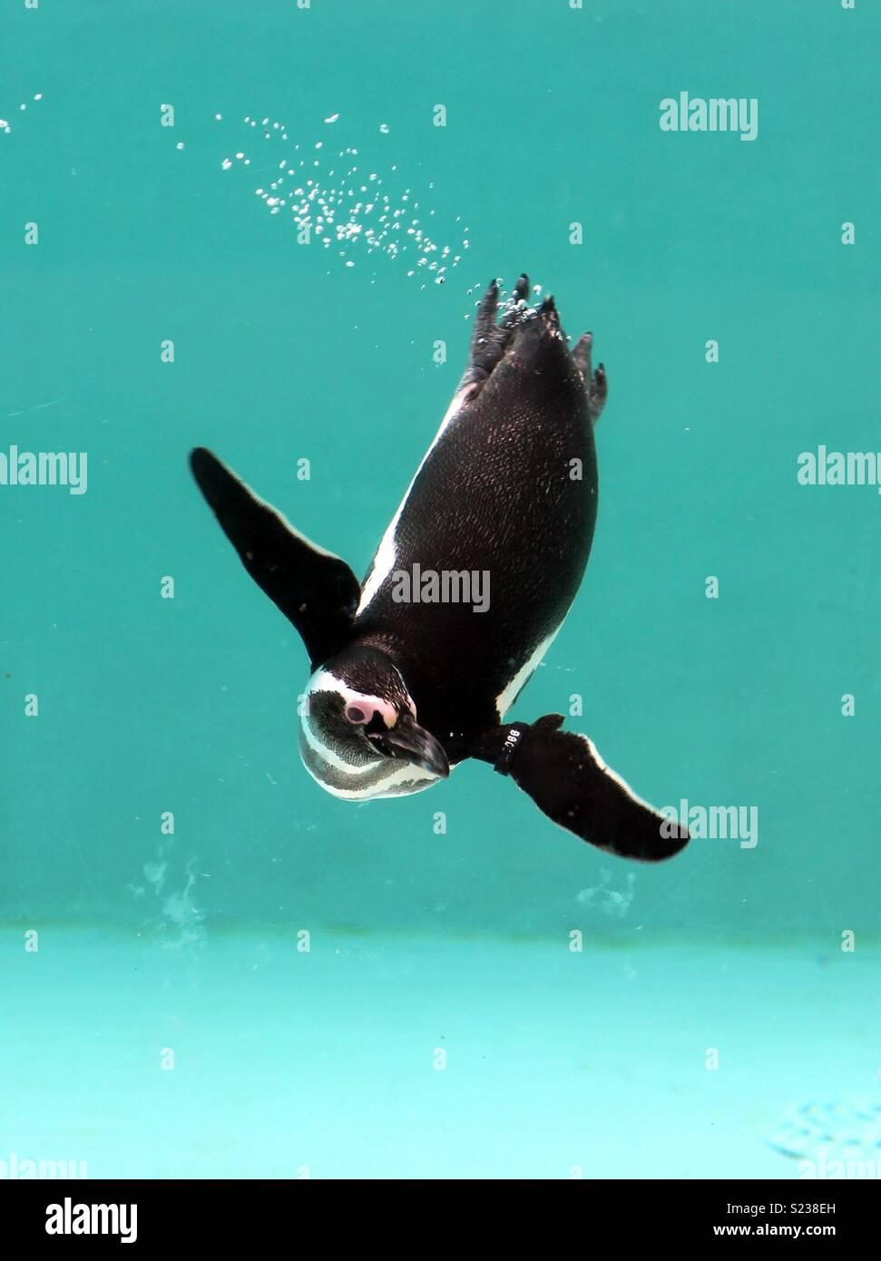 Godendo di una nuotata... Immagini Stock