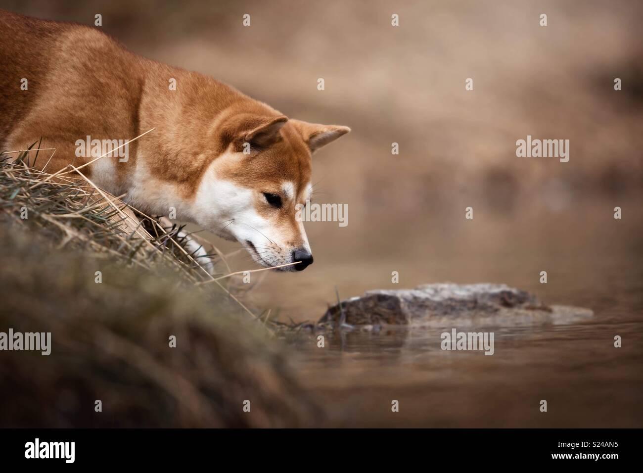 Rane & cani Immagini Stock