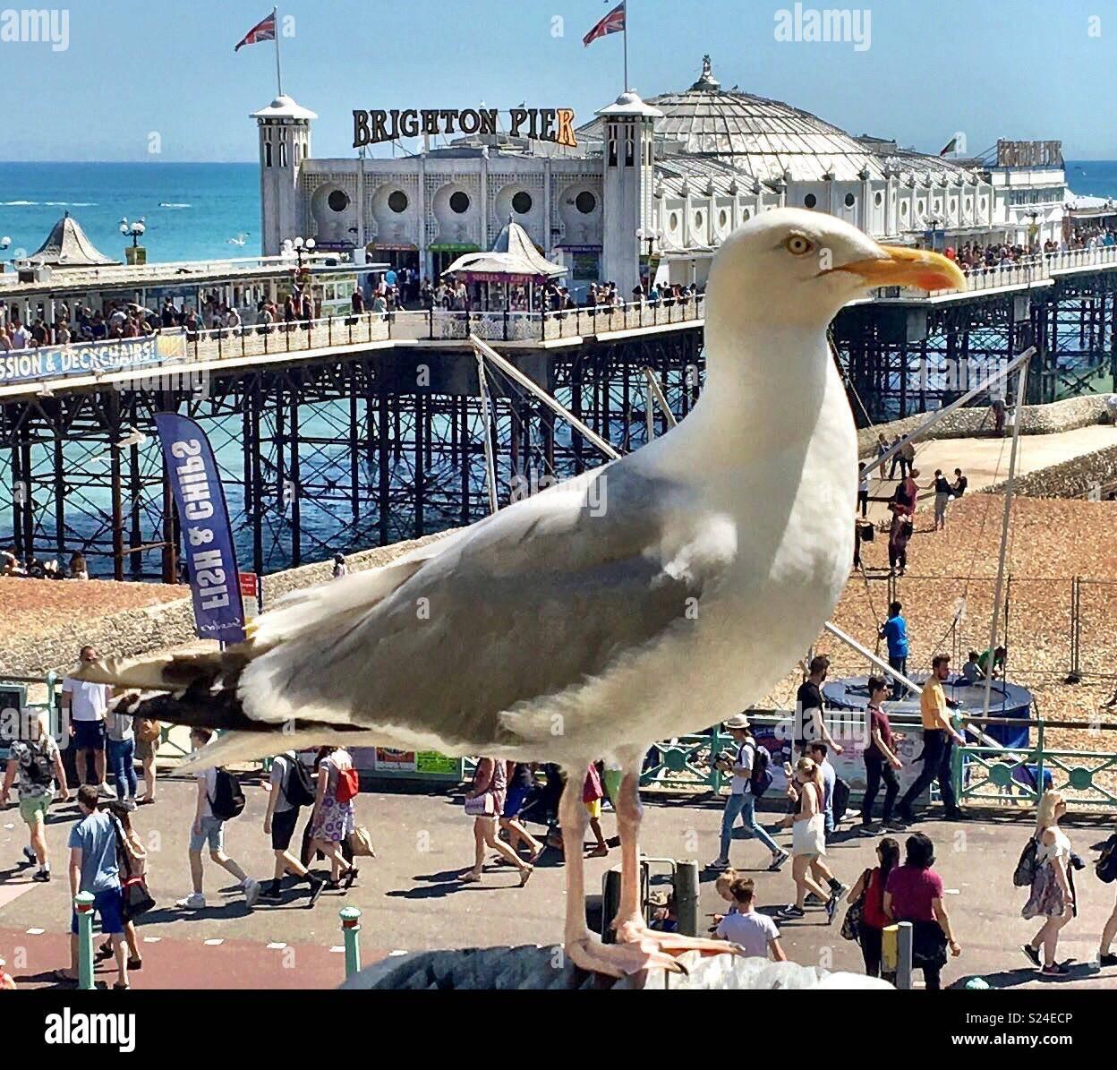 Gabbiano gigante vicino al molo di Brighton Immagini Stock