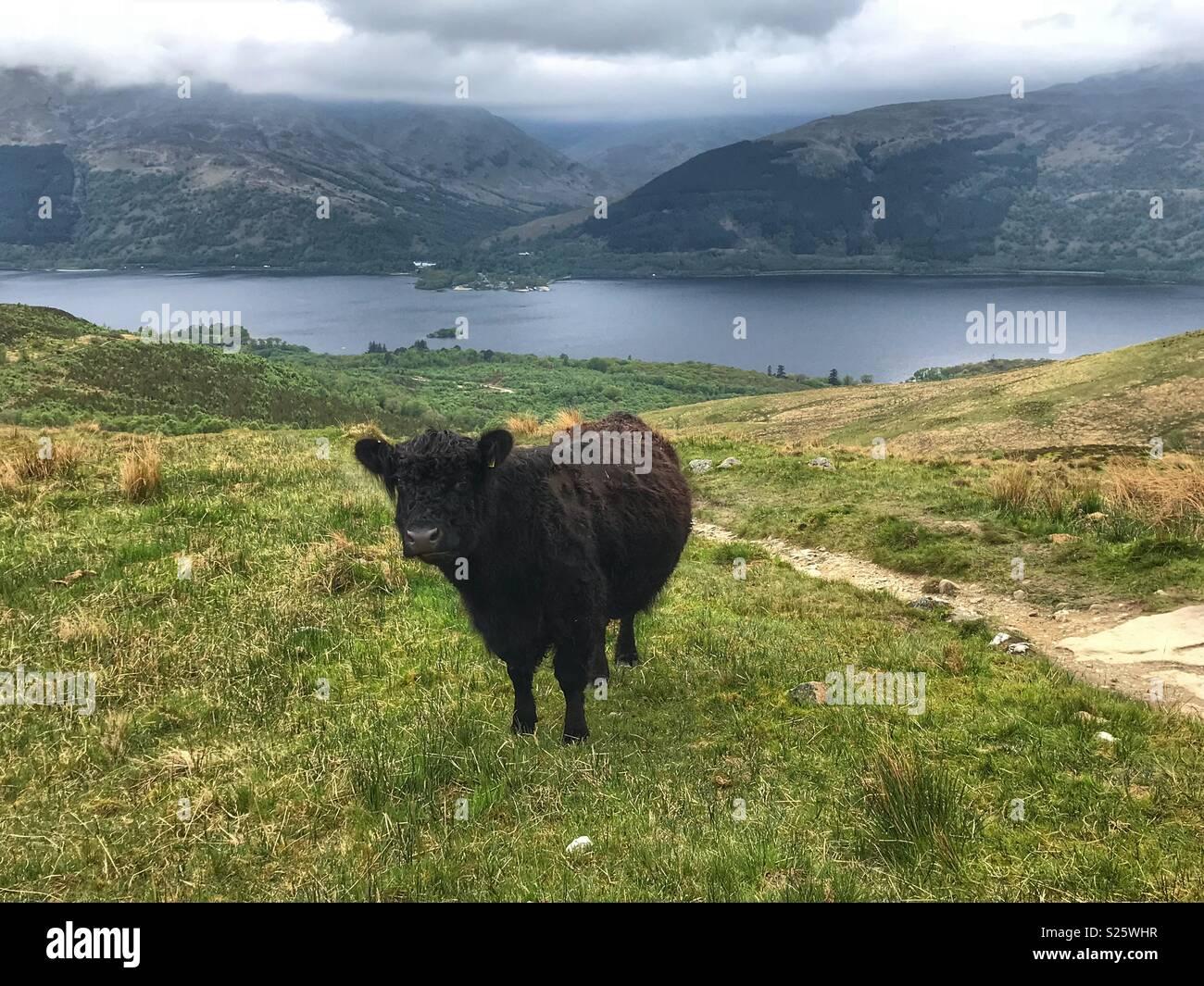 In Scozia la fauna selvatica Immagini Stock