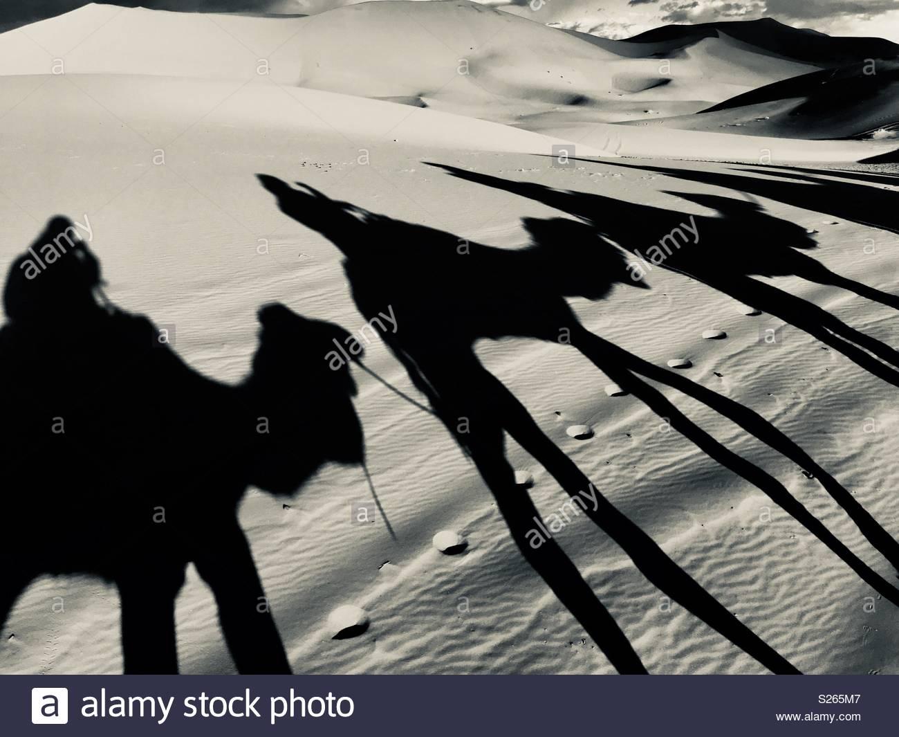 Cammelli trek attraverso le dune di sabbia Immagini Stock