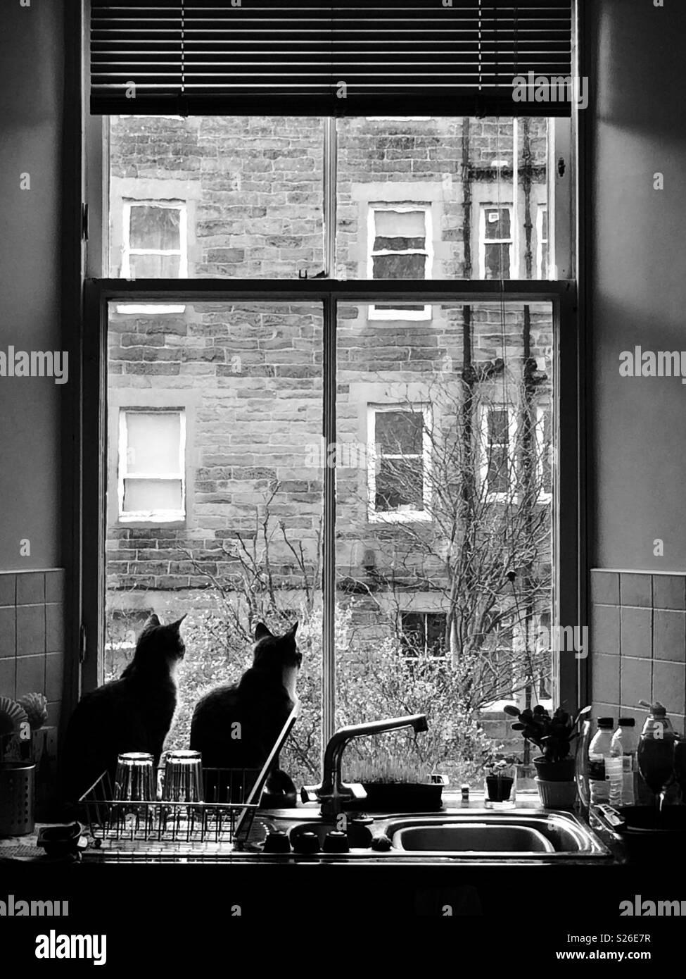 Due gatti seduti alla finestra della cucina guardando fuori in giardino. Immagini Stock