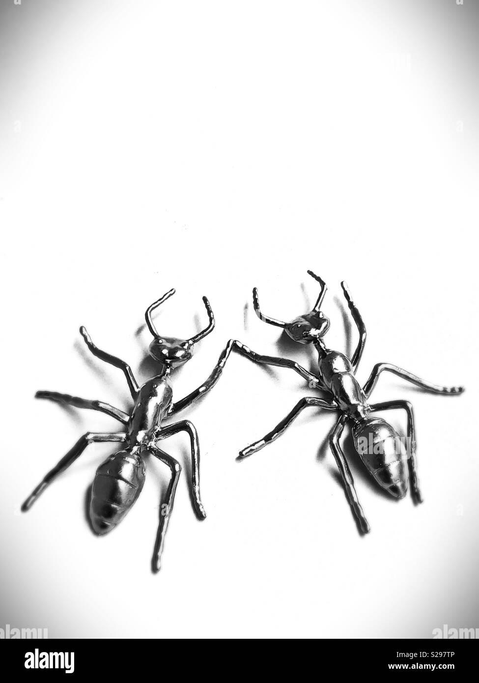 Due le formiche. Immagini Stock