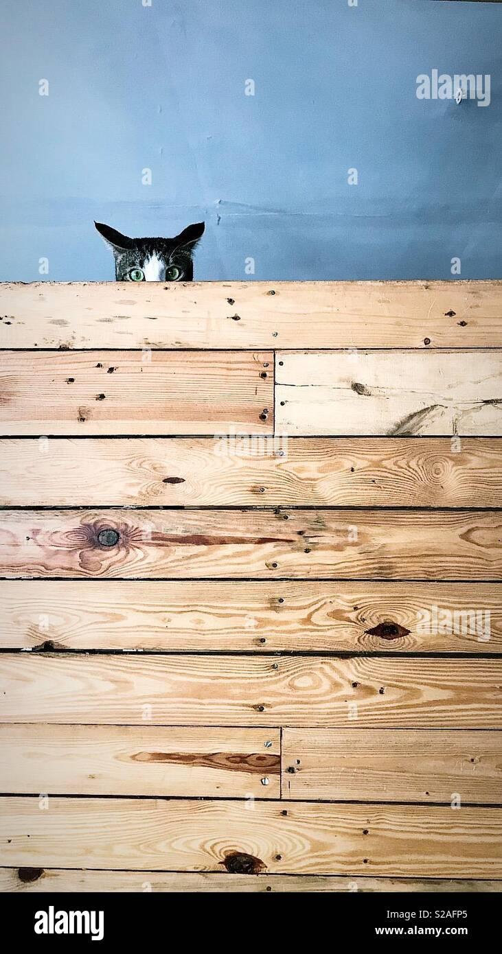 Il nascondere cat Immagini Stock