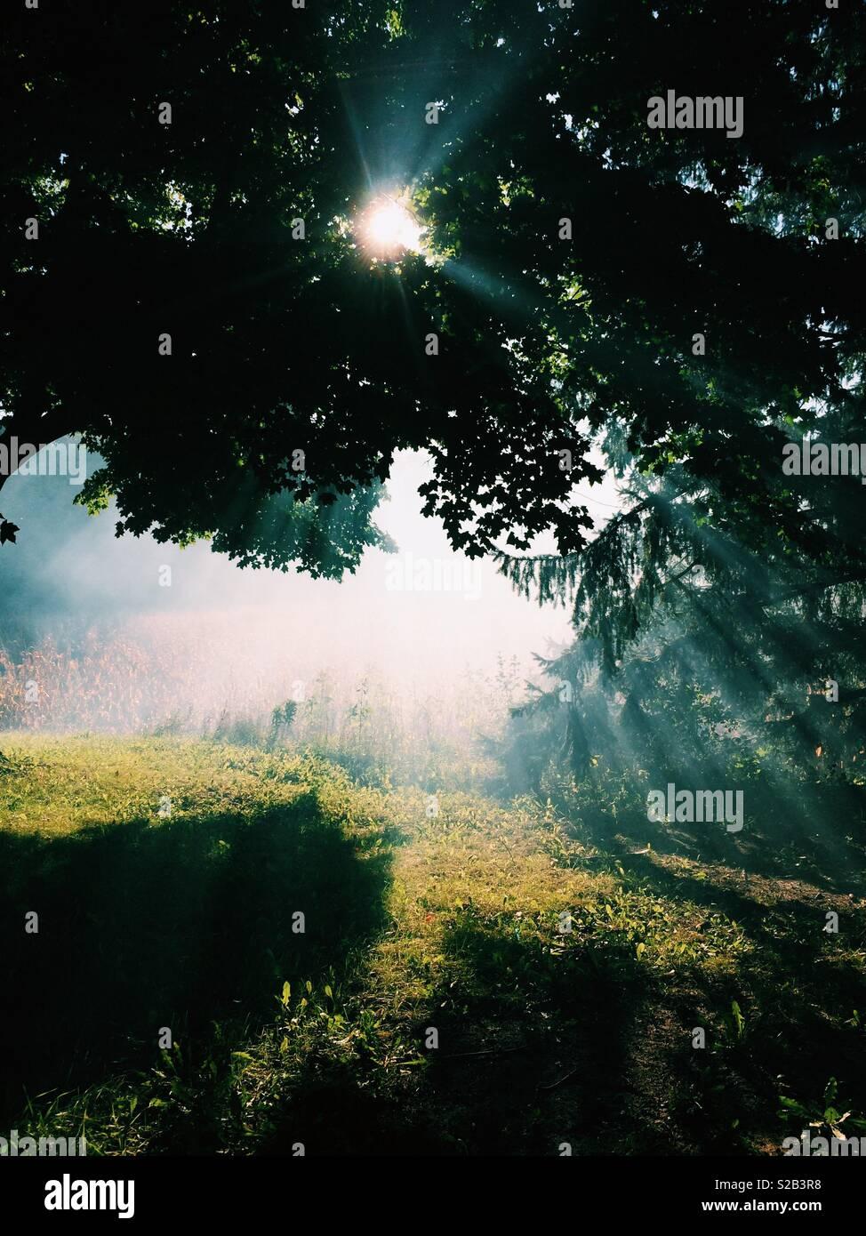 Sun flare attraverso gli alberi in un ambiente rurale. Immagini Stock