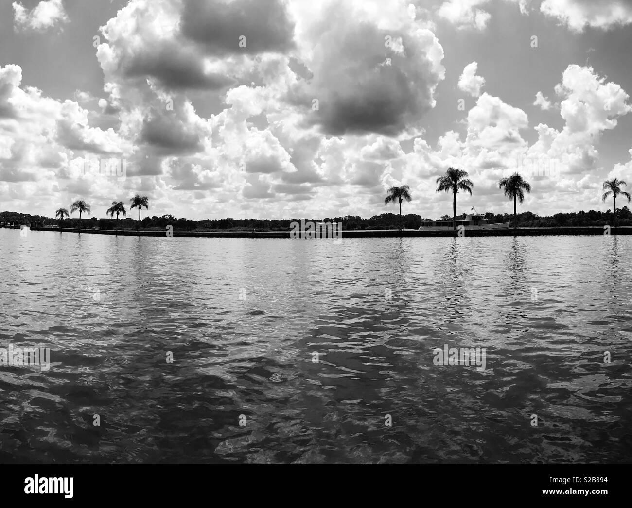 Palme e acqua Foto Stock
