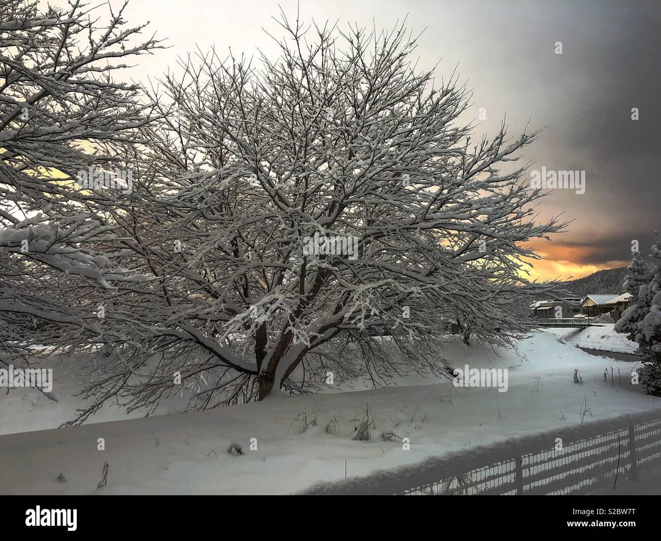 Sakura in inverno Immagini Stock
