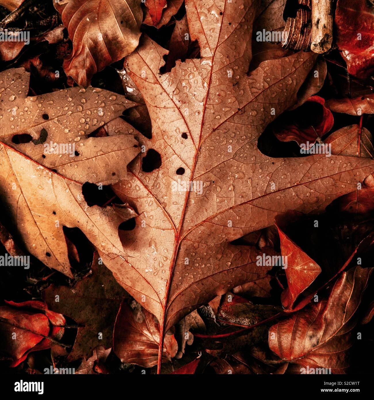 L'autunno è qui Immagini Stock