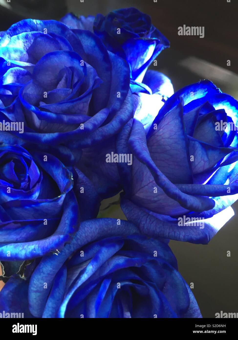 Mazzo Di Rose Blu Foto Immagine Stock 311306621 Alamy