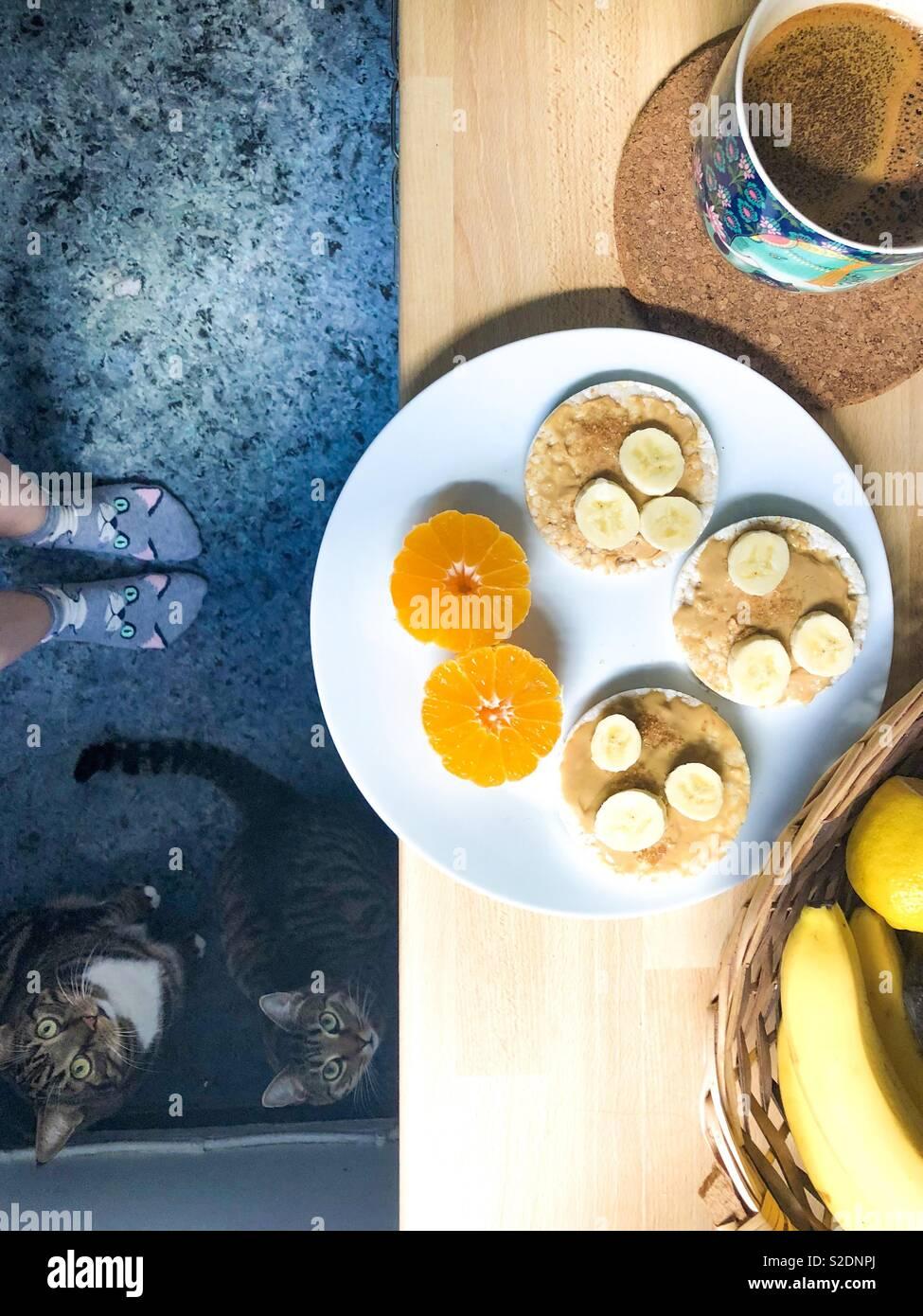 Mattina di routine - prima colazione e due gatti come azienda Foto Stock