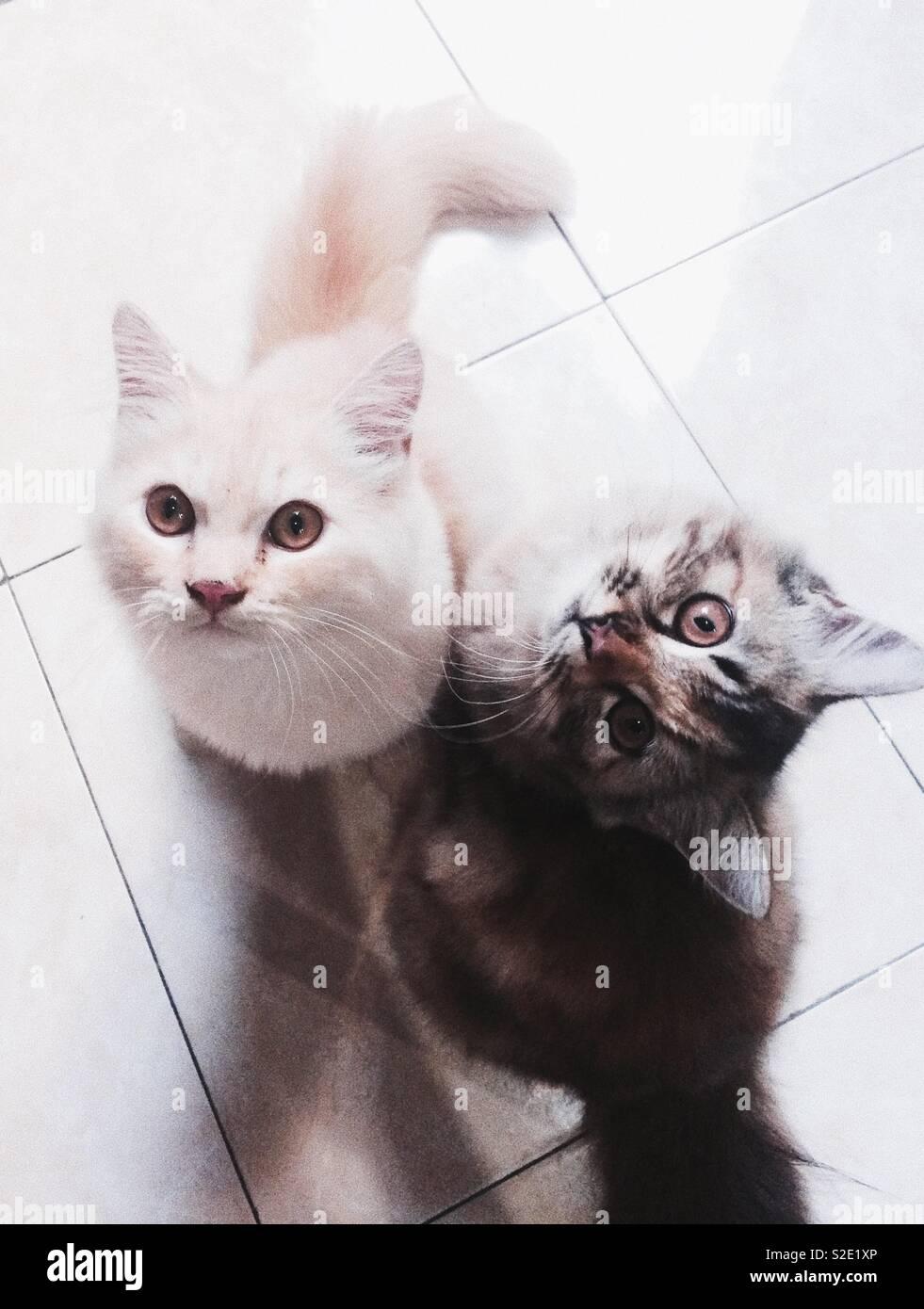 Vuoi giocare con noi? Immagini Stock
