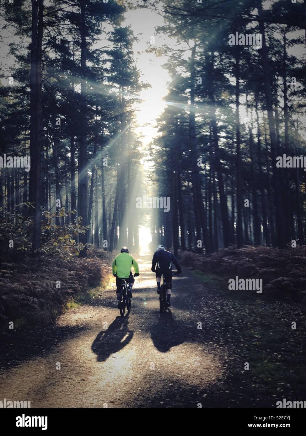 Mountain Bike nella foresta a Swinley Forest, Berks, Regno Unito Foto Stock