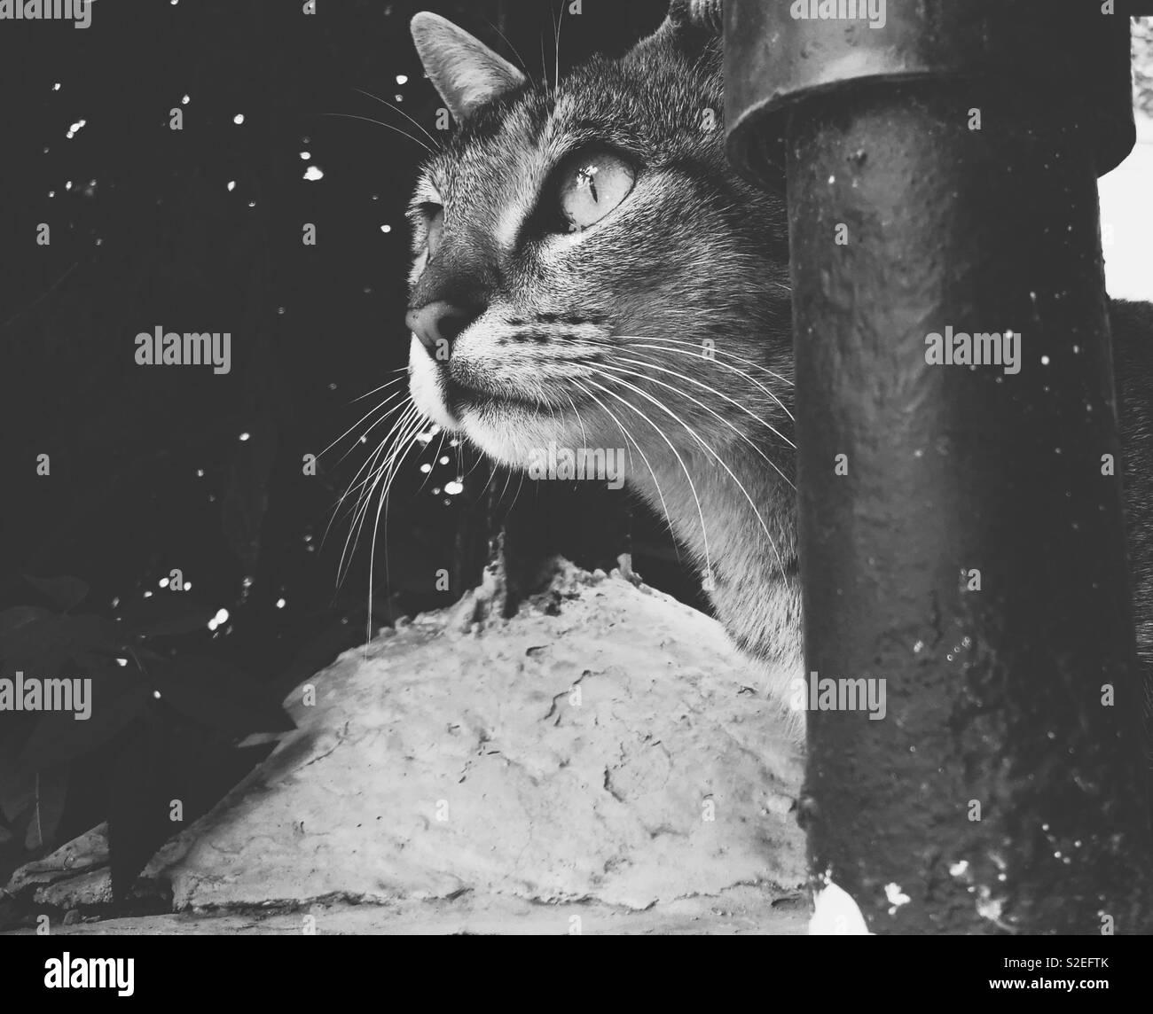 Carino gattino in casa Immagini Stock