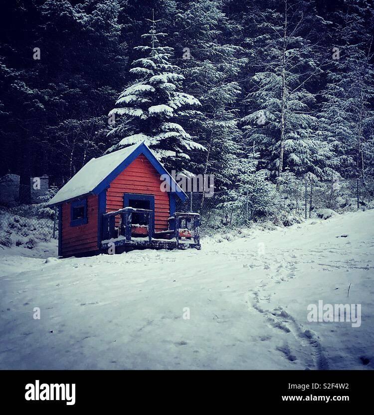 Cabina nel bosco Foto Stock