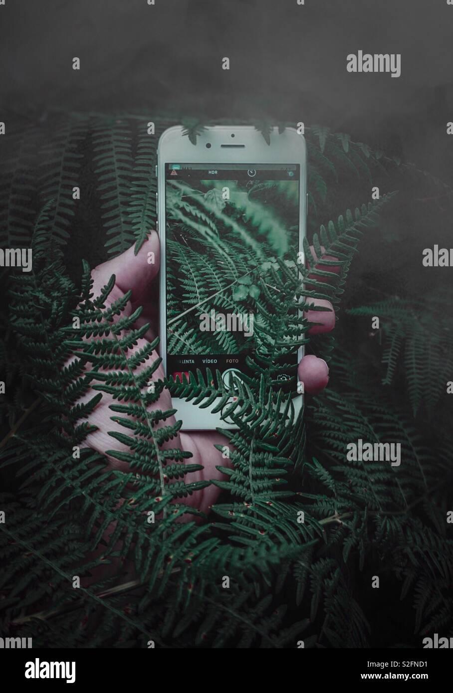 Mano con telefono in ferns Foto Stock