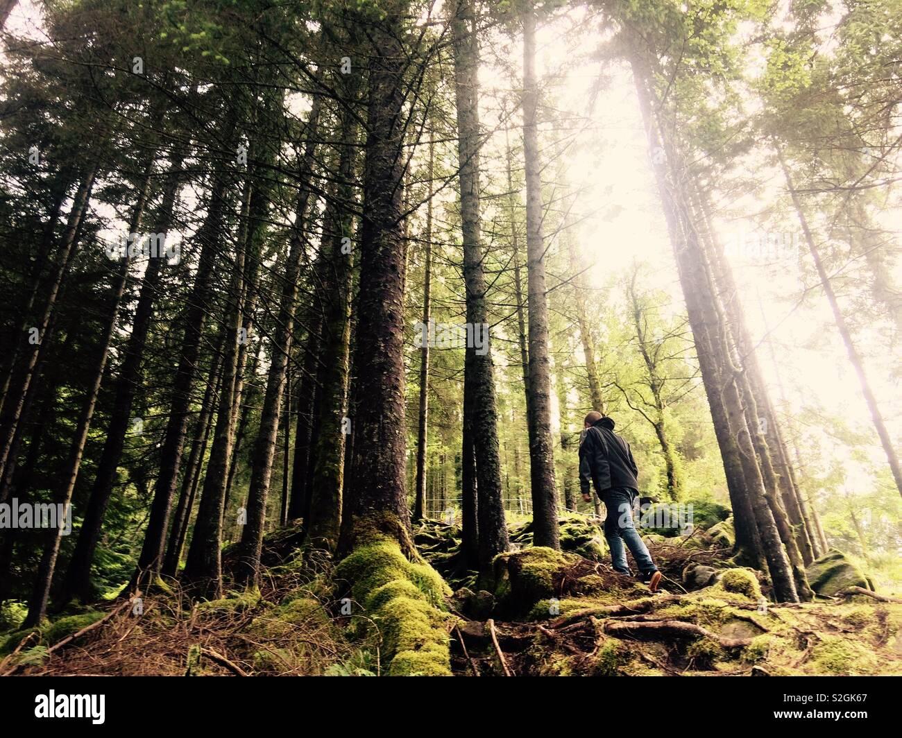 Uomo che passeggia in un bosco vicino a Bergen in Norvegia Foto Stock