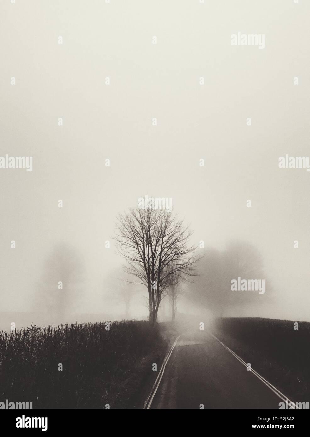 Un foggy lane con alberi Foto Stock