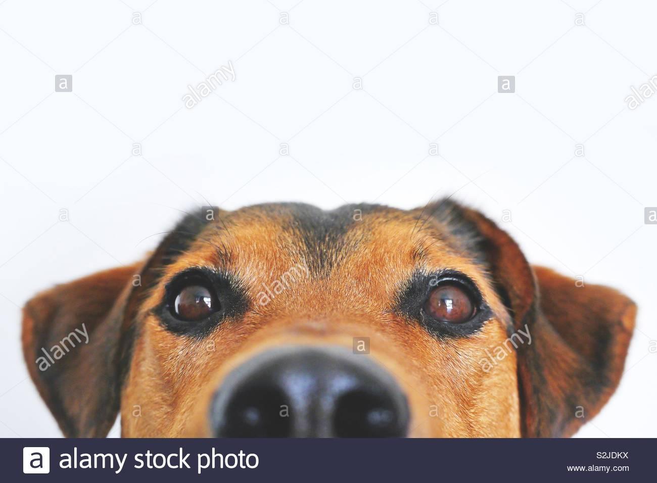 Il nostro cane Tilda - mio figlio lo screensaver del pic - sempre mi rende il sorriso! Foto Stock