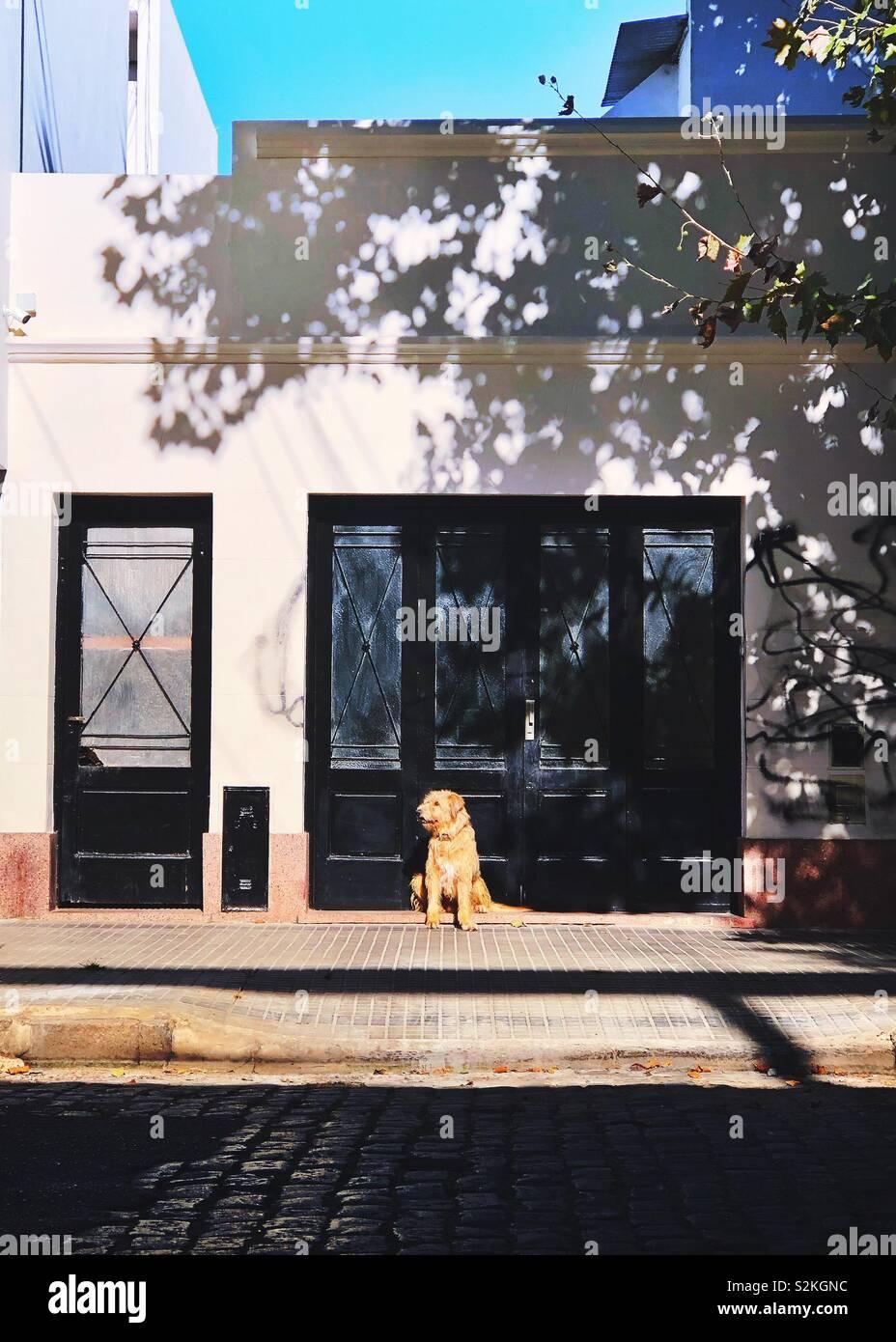 In attesa del cane per il proprietario Immagini Stock