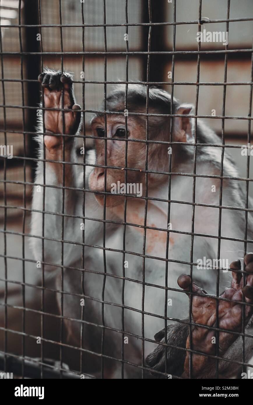 Salvataggio di scimmia Foto Stock