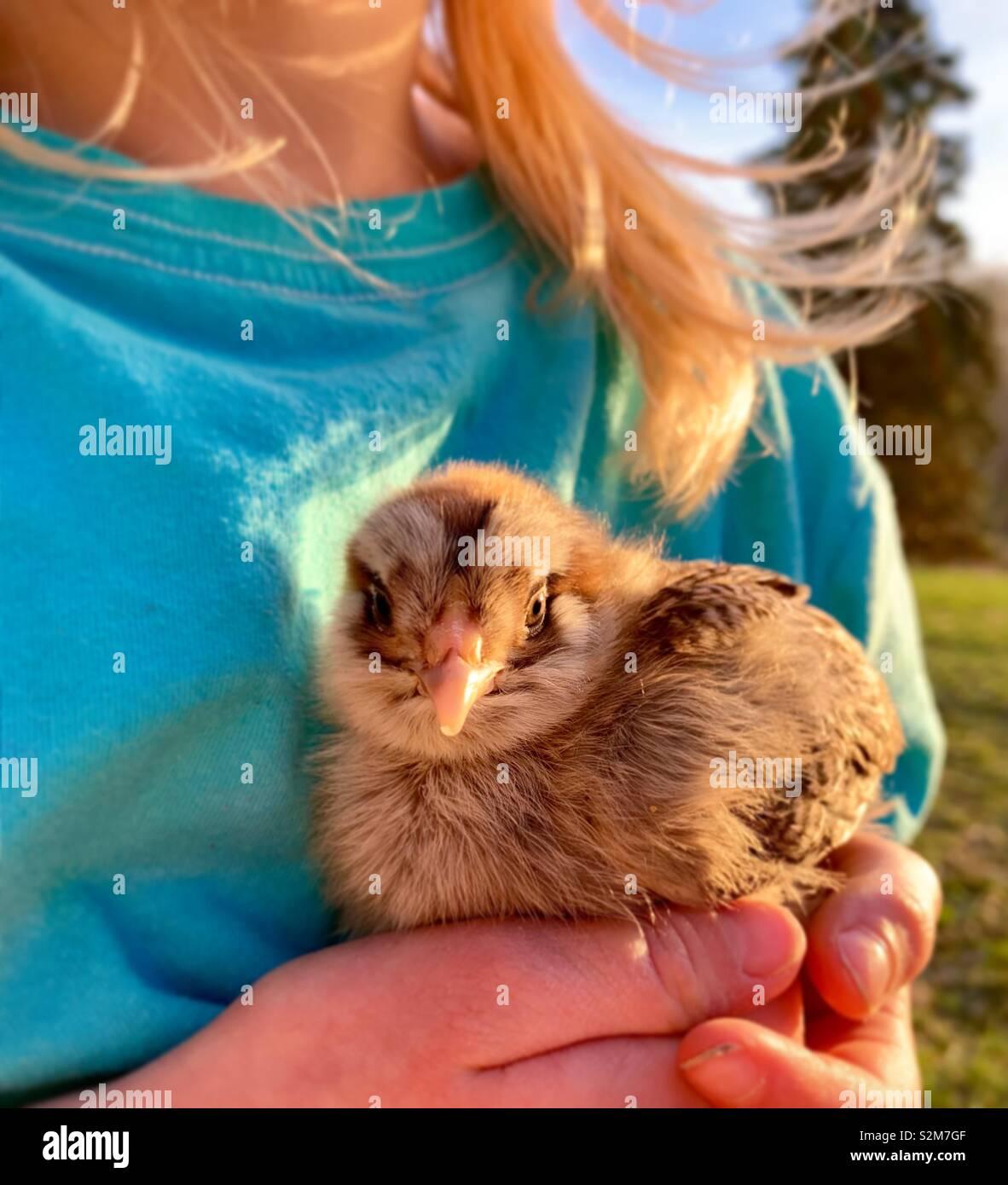 La ragazza con i capelli biondi tenendo un pulcino di bambino al di fuori alla luce del sole Foto Stock