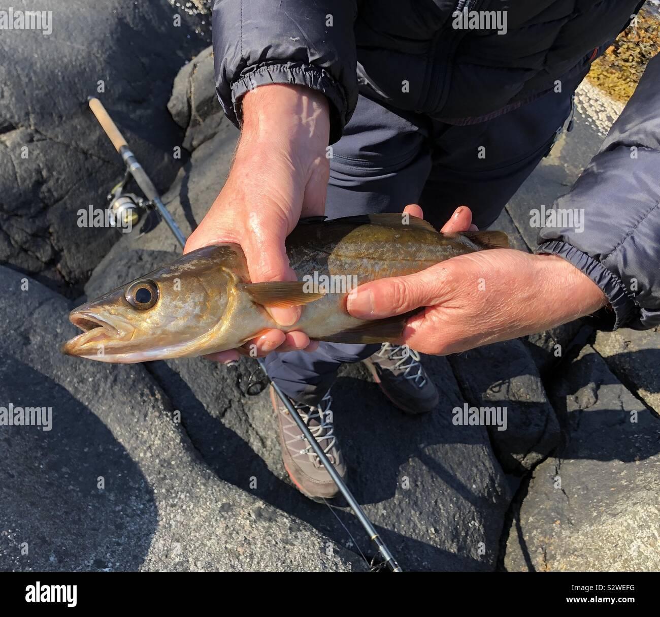 La pesca del giorno, Sognefjord, Norvegia Foto Stock
