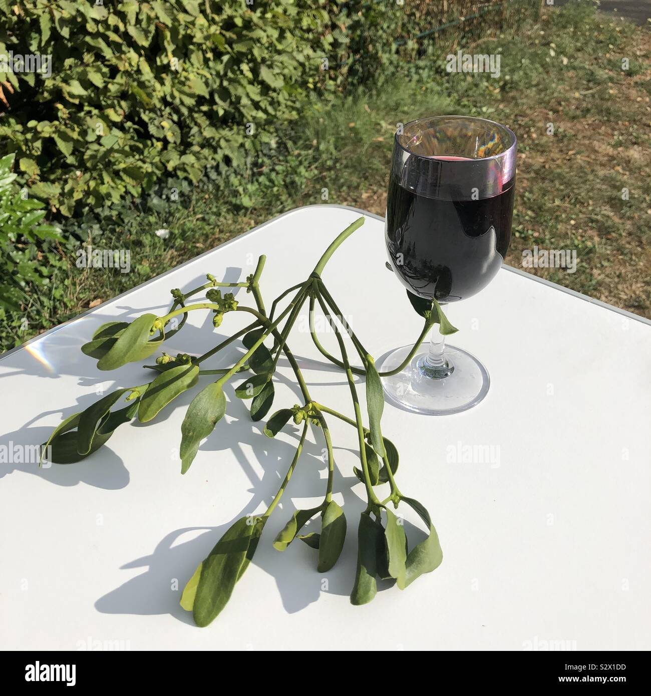 Vischio e vino Foto Stock