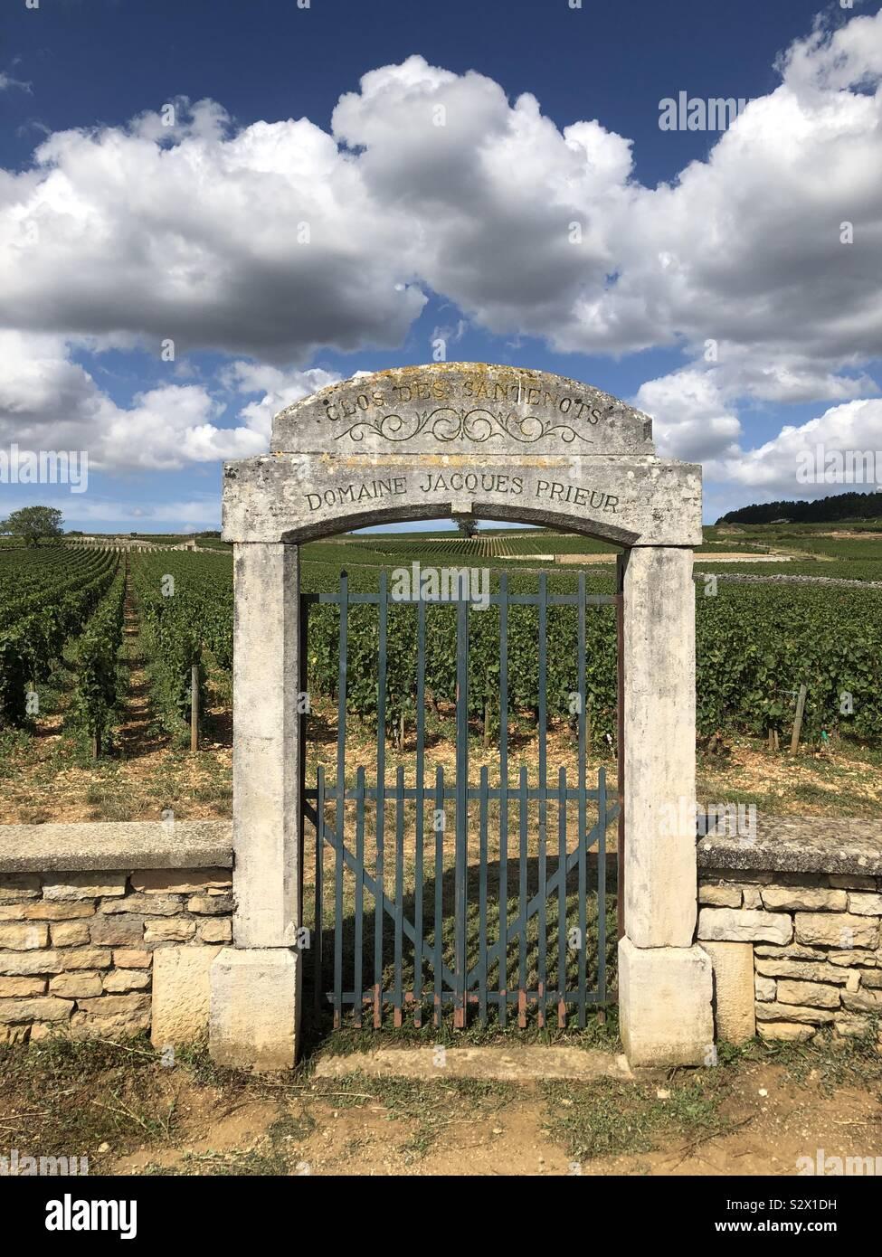 Gateway di Domaine Jacques Prieur vigneto, Beaune, Francia. Foto Stock