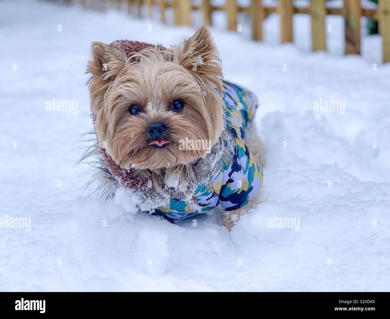 Giornate fredde Foto Stock