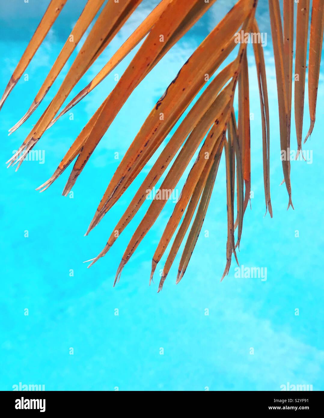 Palm tree lascia contro uno sfondo blu Foto Stock