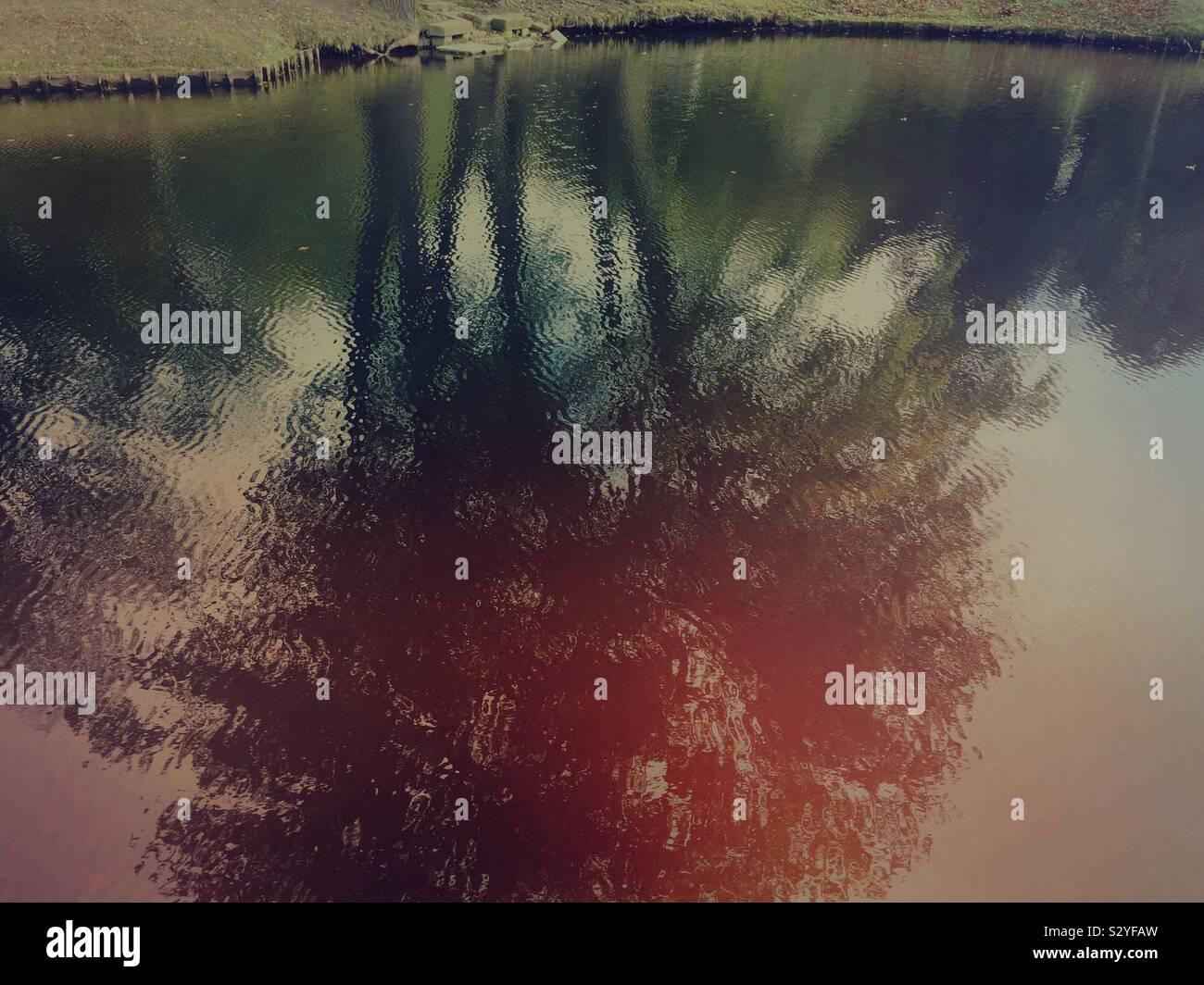 La riflessione di alberi nel lago presso Tiergarten Berlino Germania Foto Stock
