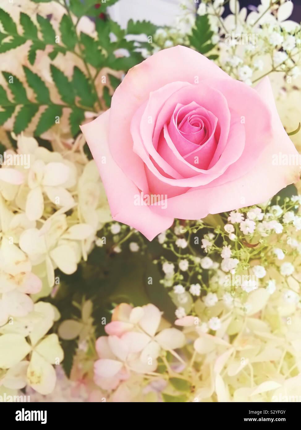 Una rosa rosa circondato da fiori bianchi in una disposizione del fiore. La messa a fuoco in primo piano e il rosa rosa. Foto Stock
