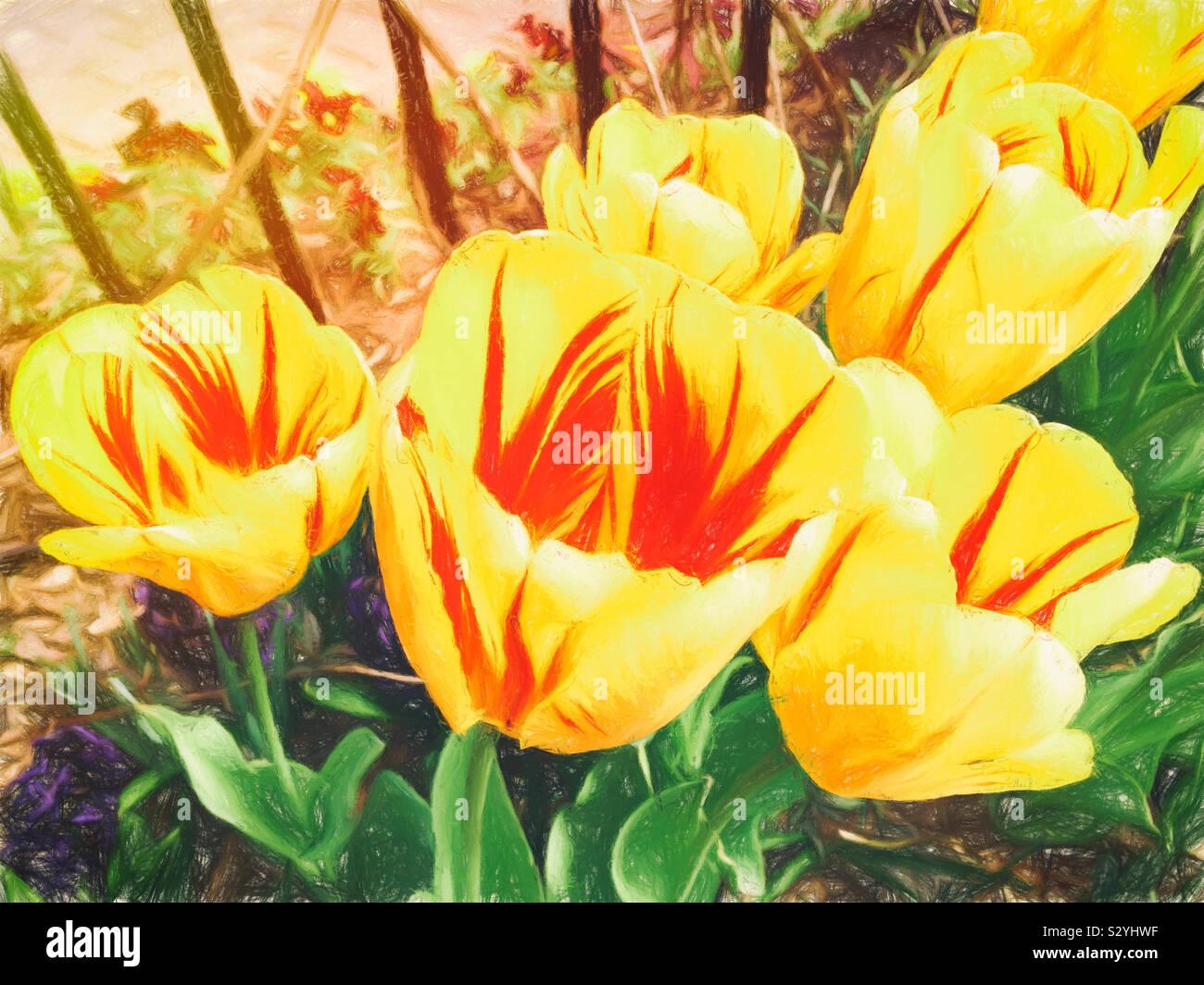 Colorato in giallo pappagallo tulipani con strisce rosse in ogni centro che crescono in un giardino esterno. Questa immagine ha una texture pittorica di effetto. Foto Stock