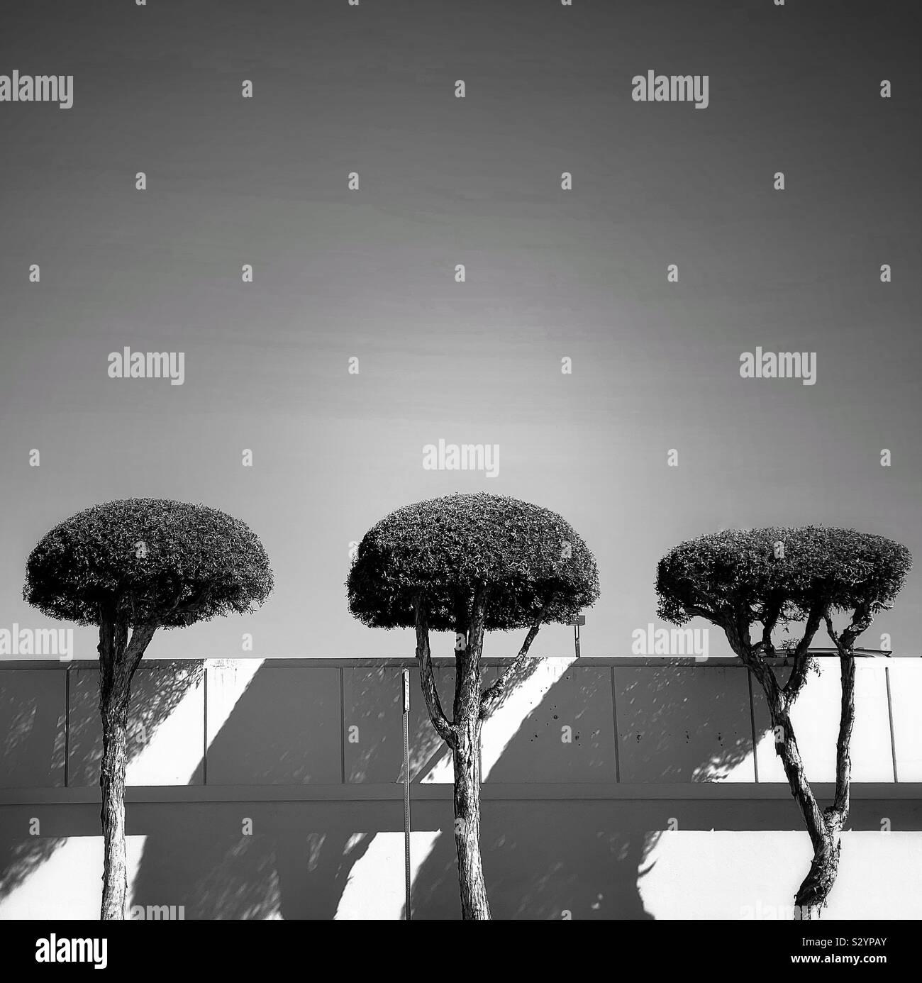Tre alberi allineati lungo una parete della città Foto Stock