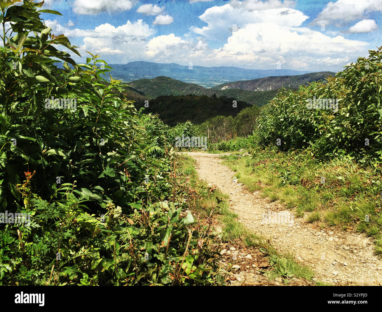 Marrone sentiero di montagna nel Parco Nazionale di Shenandoah Virginia STATI UNITI D'AMERICA. L'Appalachian Blue Ridge Mountains sono in background. Questa immagine ha un grunge effetto testurizzato. Foto Stock