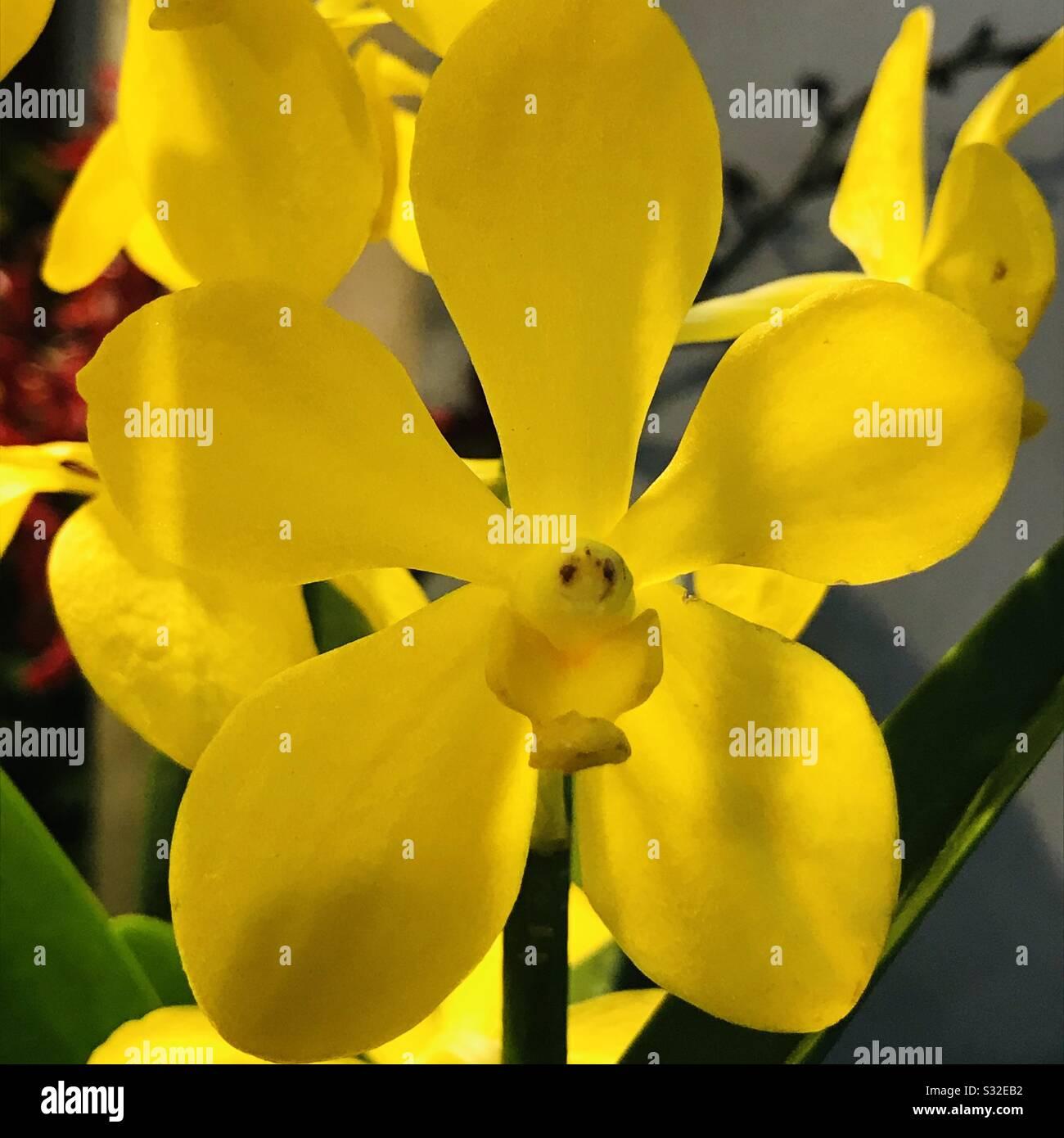 Piante Strane Da Appartamento piante d'appartamento da riproduzione immagini e fotos stock