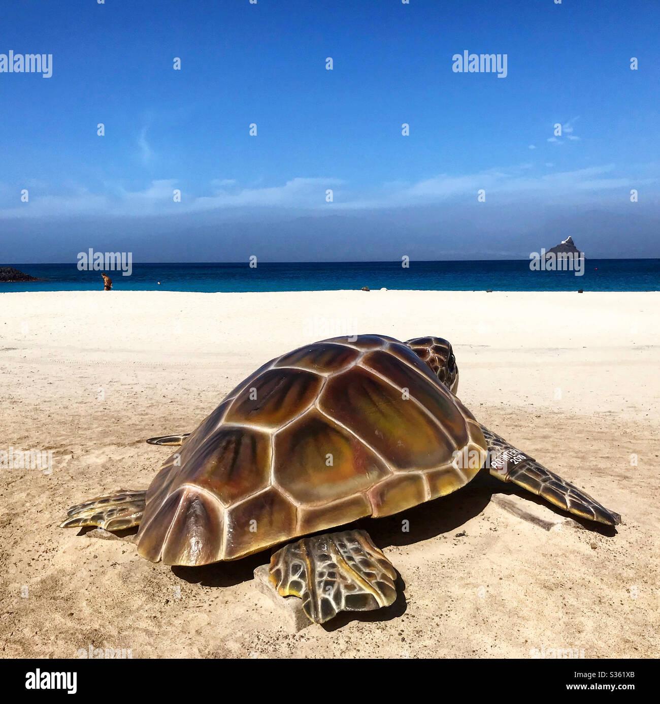 tartaruga sulla spiaggia di Lajinha a Capo Verde Foto Stock