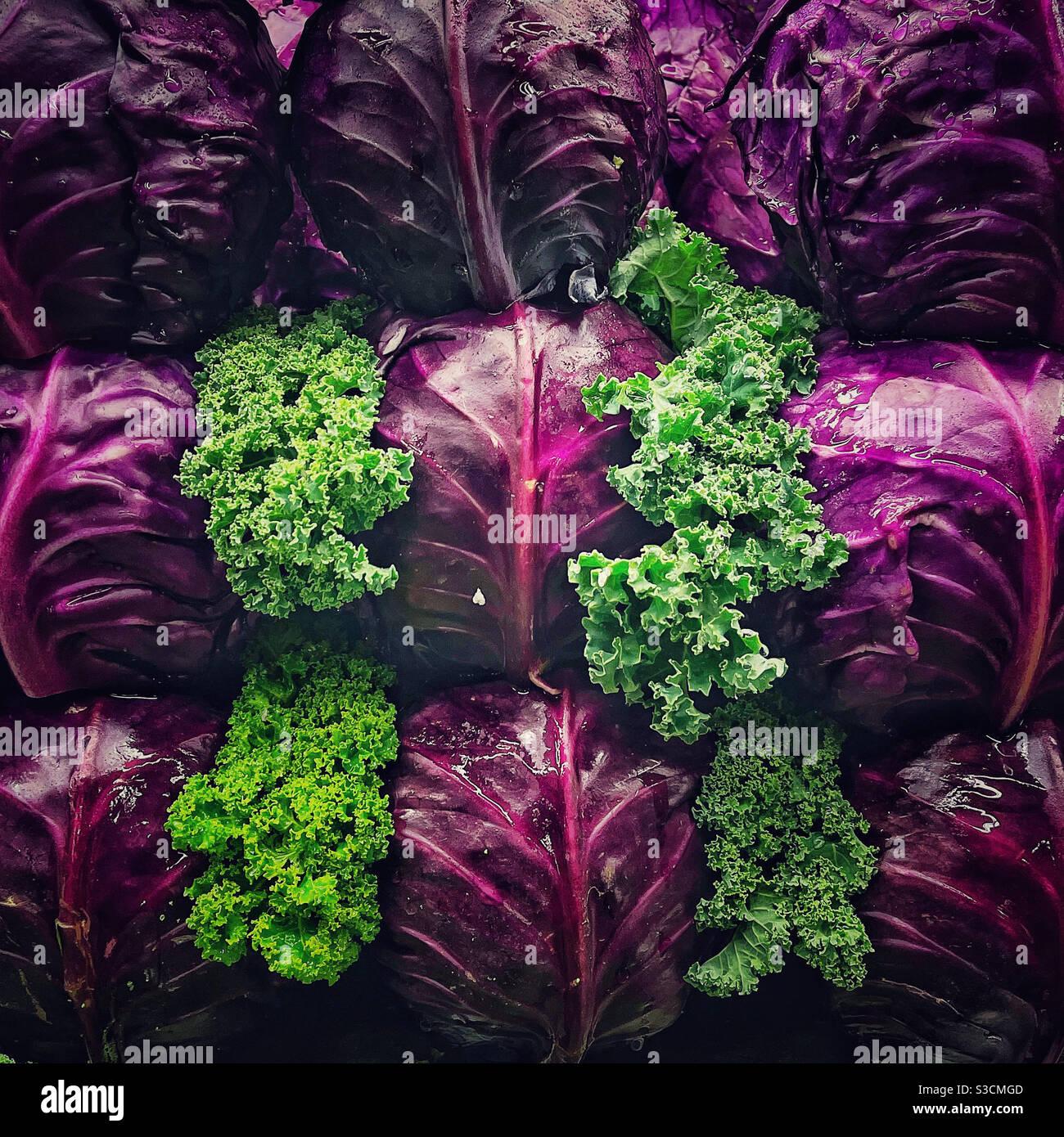 Kale e cavolo rosso in esposizione Foto Stock