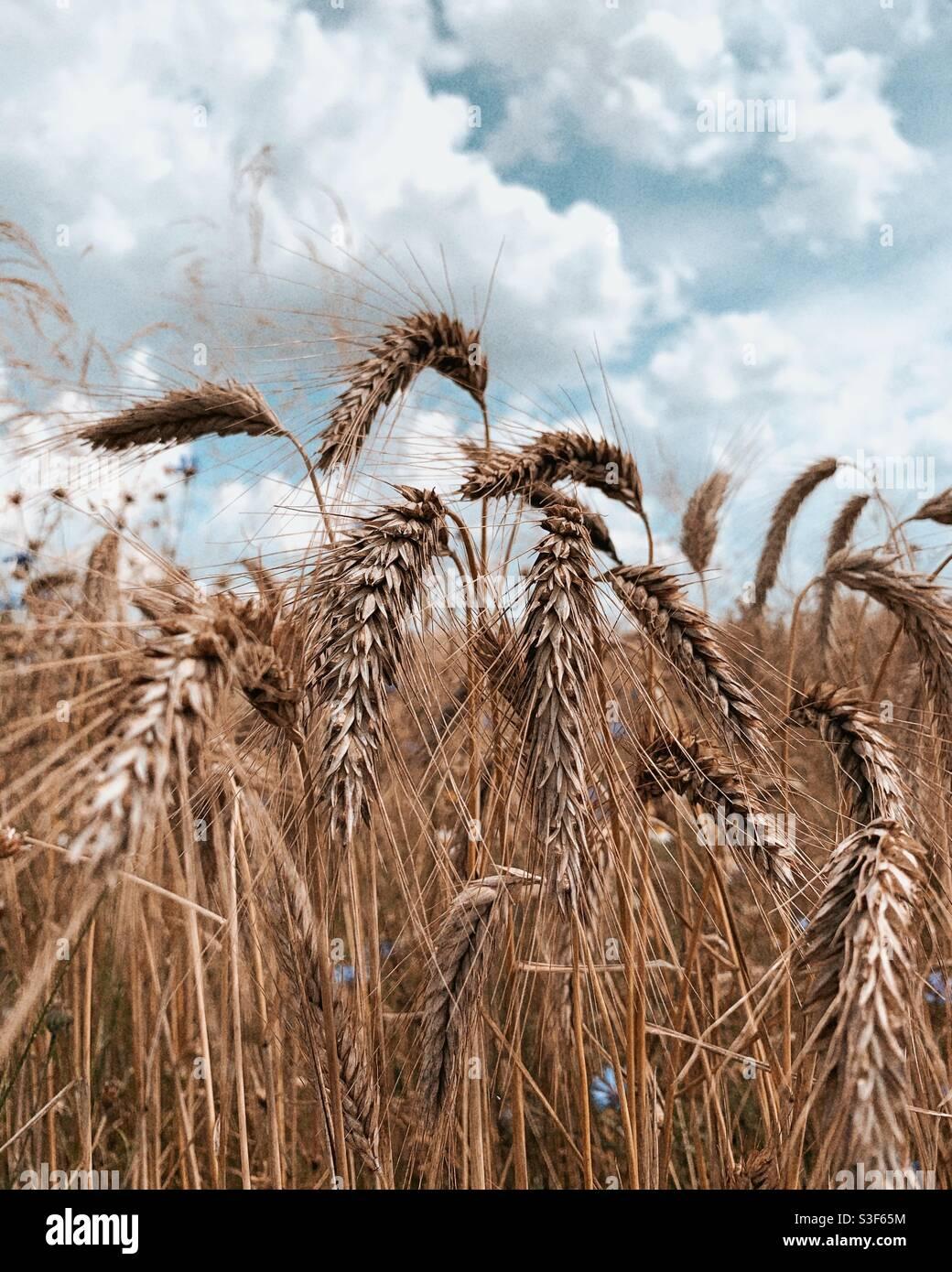 Natura dei campi di campagna Foto Stock