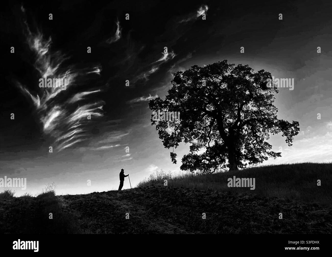 Uomo con cappello e bastone a piedi da un albero di quercia, in bianco e nero Foto Stock