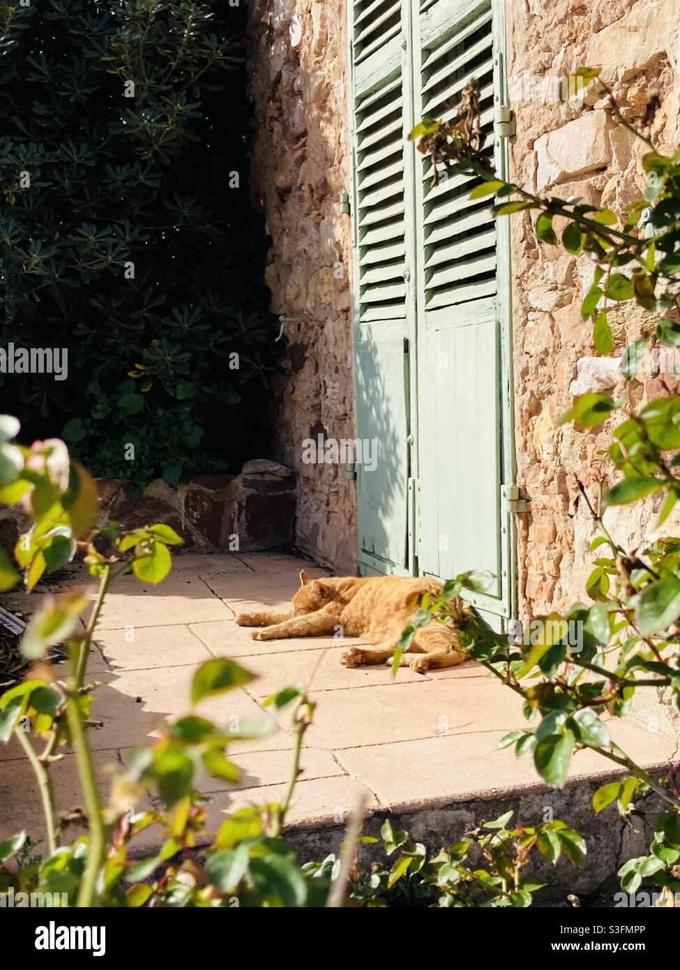 le sud est réputé pour sa sieste au moment des fortes chaleurs de la journée .pour un chat c'est encore più une réalité Foto Stock