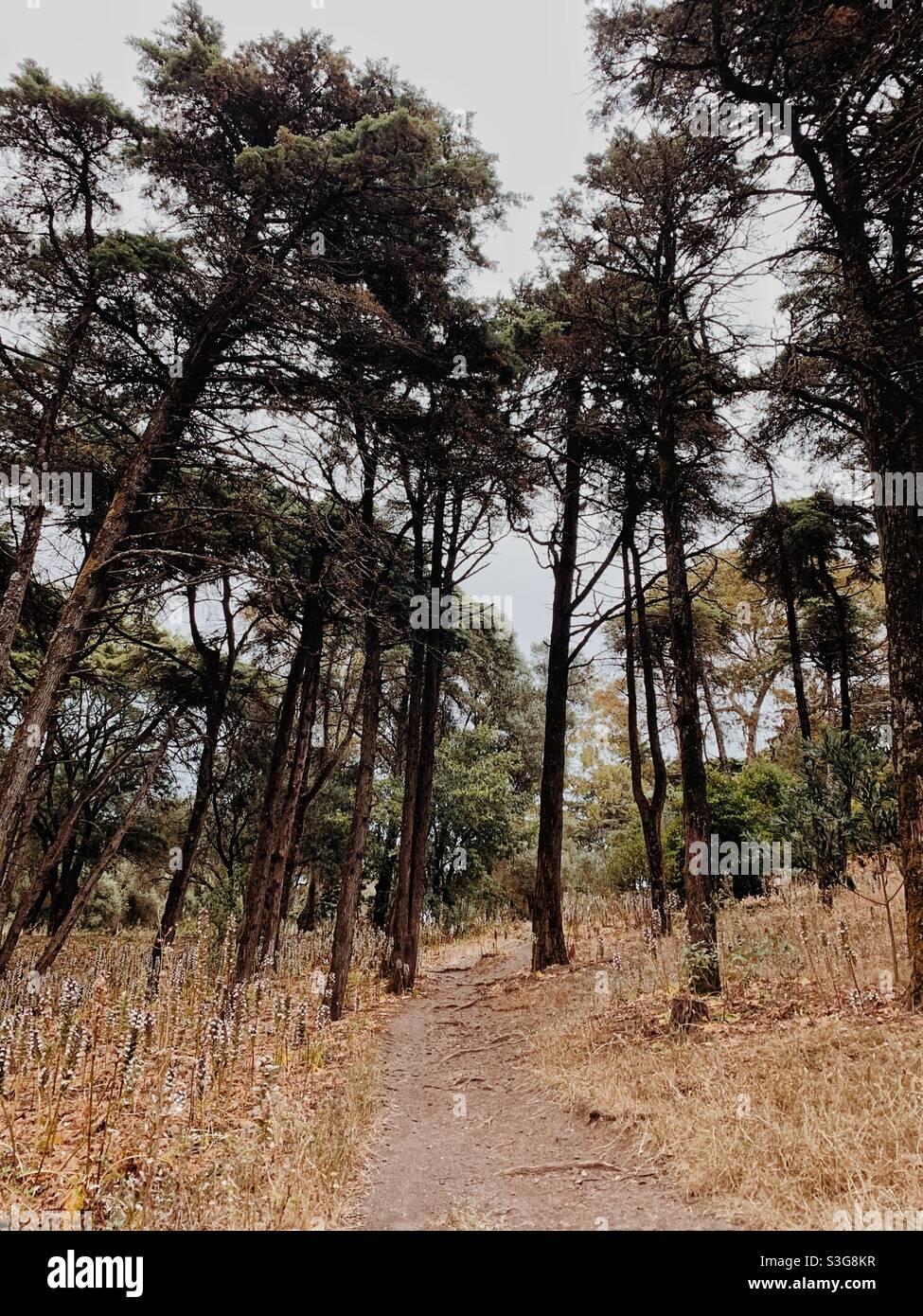 Gli alberi in una foresta Foto Stock