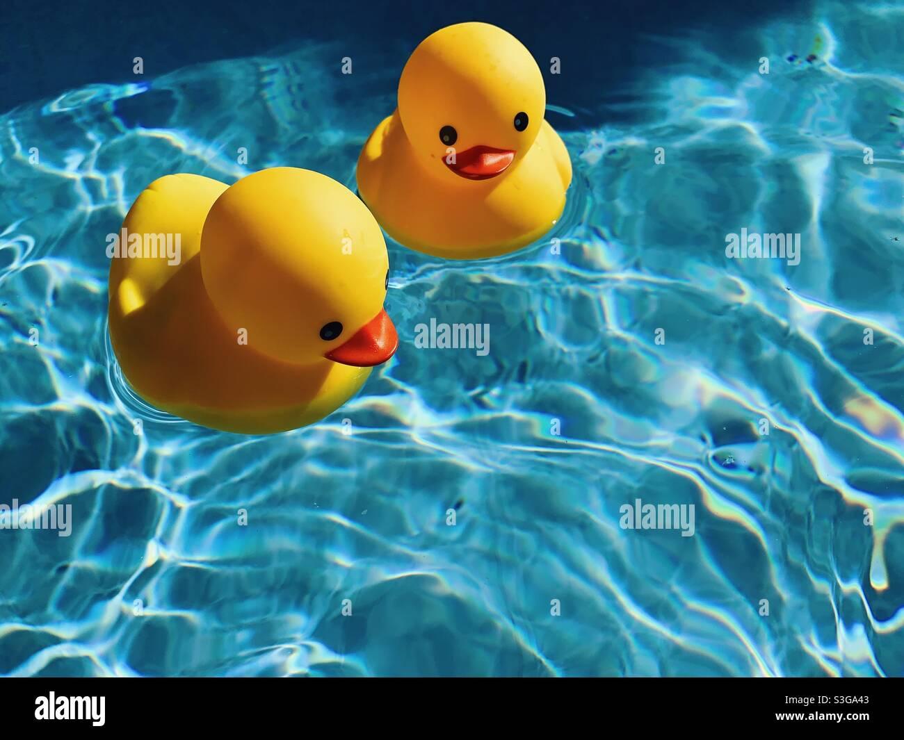 Due anatre di gomma gialla si trovano a galla in una piscina all'aperto in una calda e soleggiata giornata estiva. Foto Stock