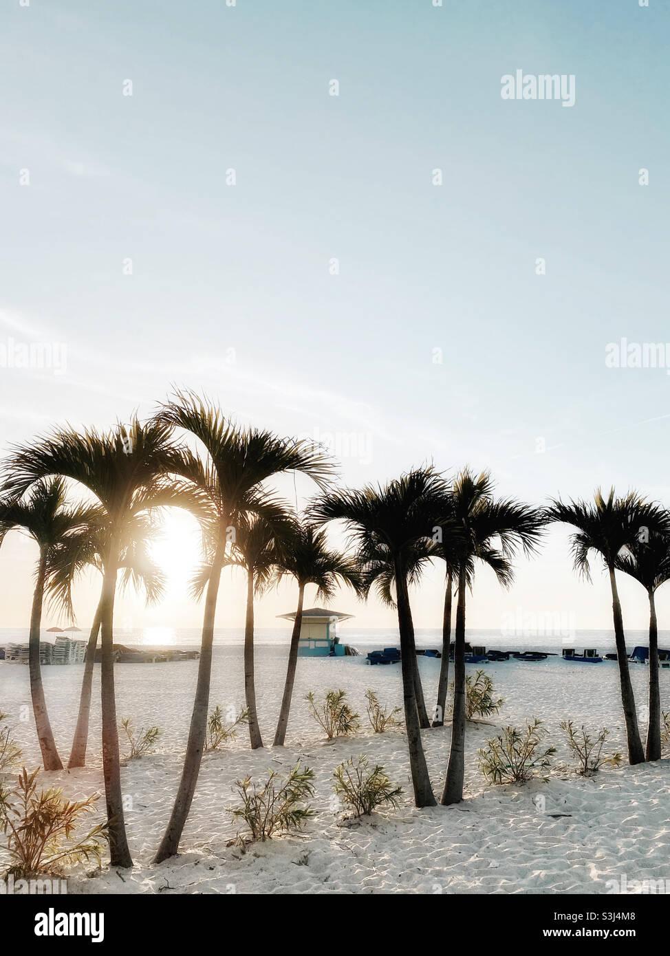 Alberi di palma sulla spiaggia di St. Pete, Florida Foto Stock