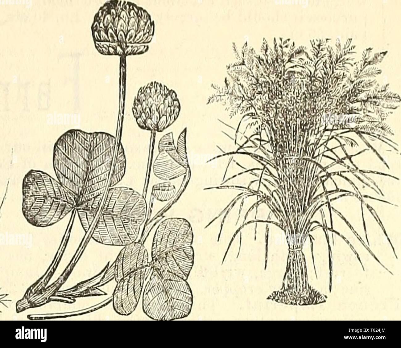 Terra Buona Per Giardino dreer giardino del calendario per il 1887