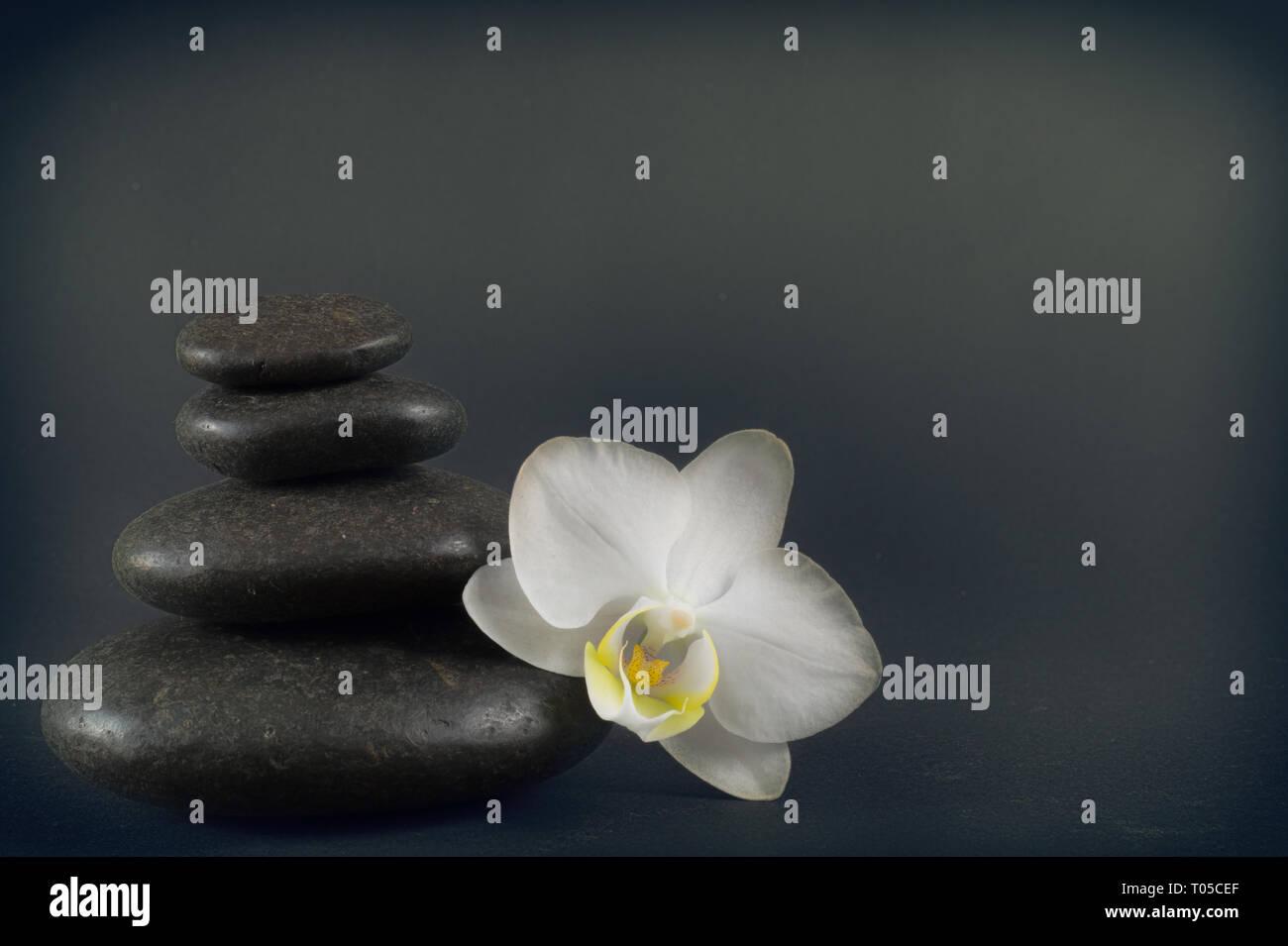 White Orchid e pietre di colore nero su uno sfondo scuro. Immagini Stock
